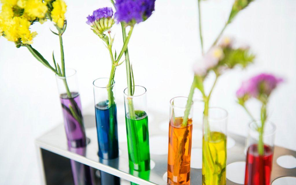 Bild von Blumen in bunten Reagenzgläsern